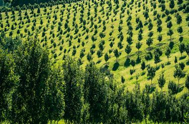 Hancock durante el 2014 compró a Masisa cerca de 62 mil hectáreas forestales en Temuco y Valdivia.