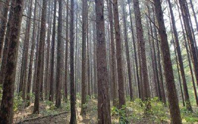 Ingenieras chilenas asesoran a forestales de Sudamérica