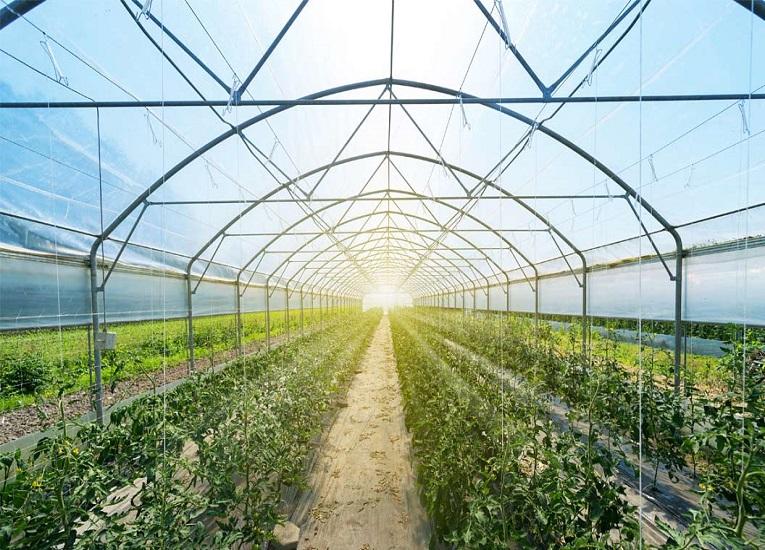 Agricultura sostenible, una apuesta para recuperar a Latinoamérica