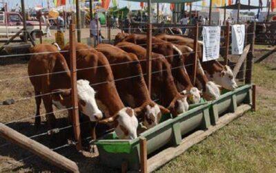 Argentina impulsa plan ganadero para subir su producción